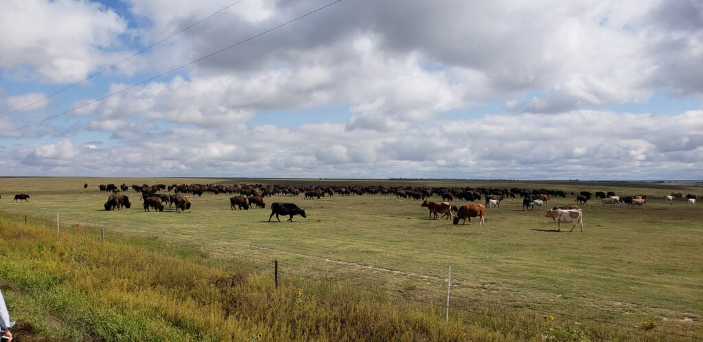 Fall 2018 Ranch Tour at Beaver Creek Buffalo Ranch near Goodland, KS